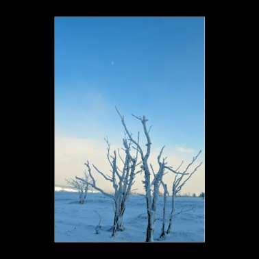 Trees in the frost Poster - Poster 24 x 35 (60x90 cm)