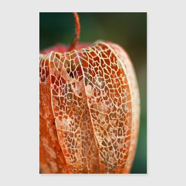 Physalis im Winter - Poster 60x90 cm