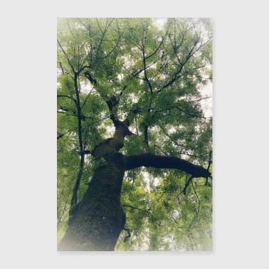 The tree the green lung - Poster 24 x 35 (60x90 cm)