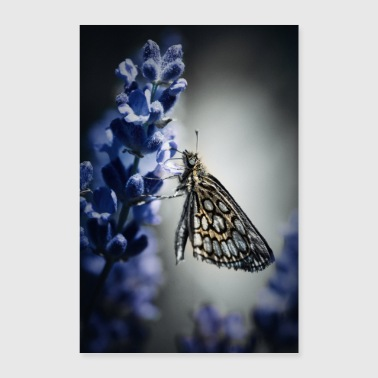 Sit Butterfly and lavender - Poster 16 x 24 (40x60 cm)