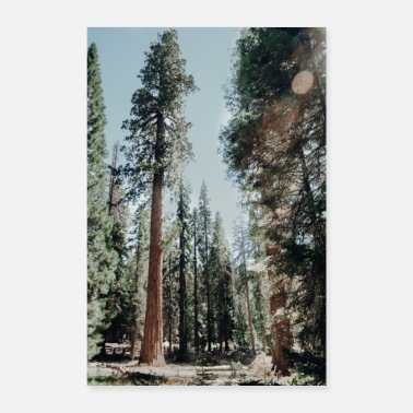 National Park Sequoia in Sequoia National Park - Poster
