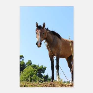 Ride A Horse Horse horses riding equestrian poster gift - Poster