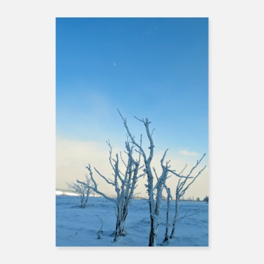 Frost Trees in the frost Poster - Poster
