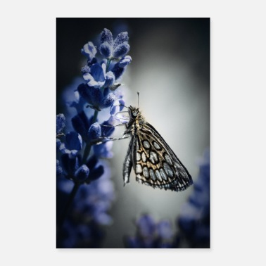 Fauna Butterfly and lavender - Poster