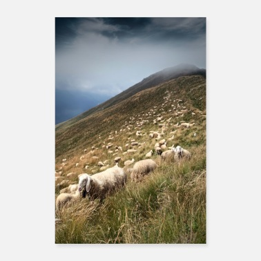 Julián Sheep on alpine pasture in Italy - Poster