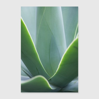 Agave in Santa Catarina Park Madeira - Poster 40x60 cm