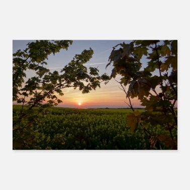 Fantastic Sunset at the field edge - Poster 36 x 24 (90x60 cm)