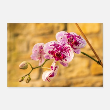 Orchidee Orchidee - Poster