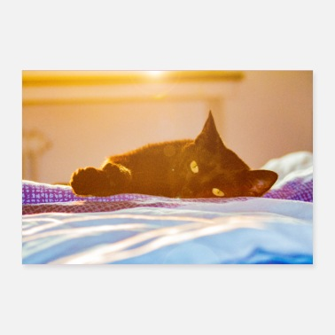 Cat on blankets at sunset - Poster