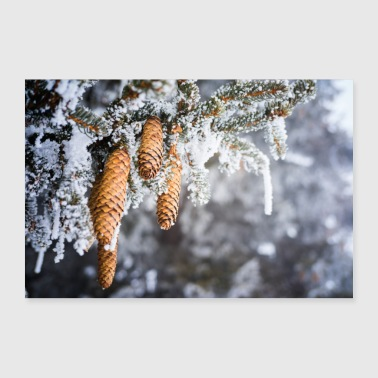 MOUNTAIN PINE APPLES - Poster 36 x 24 (90x60 cm)