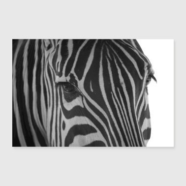 Equus burchelli - Grants Zebra - Poster 90x60 cm