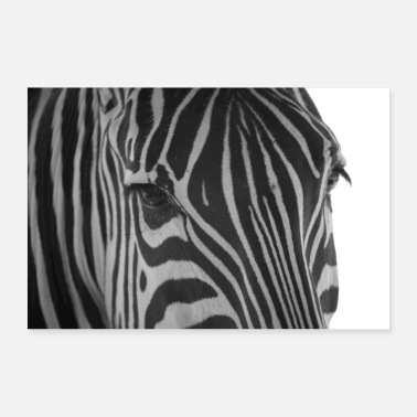 Animal Collection Equus burchelli - Grant's Zebra - Poster 36 x 24 (90x60 cm)