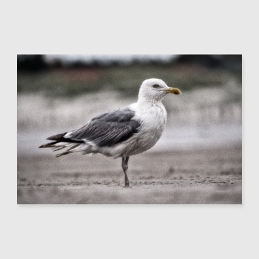 Wet seagull on the beach - Poster 36 x 24 (90x60 cm)