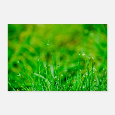 Stick Green meadow with morning dew poster - Poster 36 x 24 (90x60 cm)