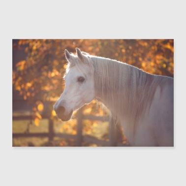 Stallion White horse gray stallion mane fairy tale - Poster 36 x 24 (90x60 cm)