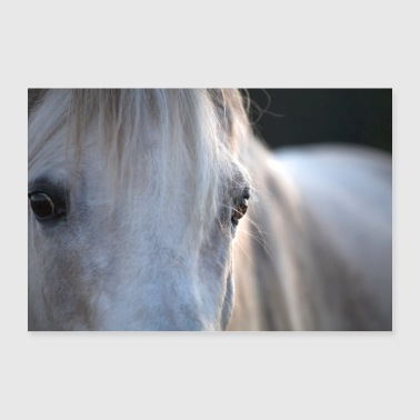 White horse gray stallion eyes mane - Poster 36 x 24 (90x60 cm)