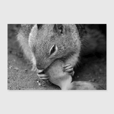 Squirrel squirrel animal nature - Poster 36 x 24 (90x60 cm)