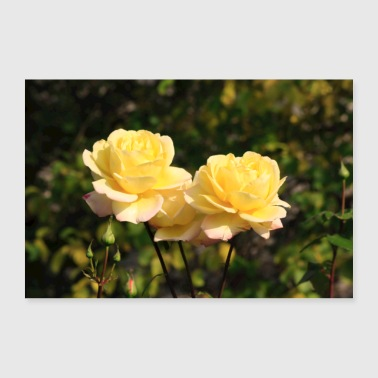 yellow rose - Poster 36 x 24 (90x60 cm)