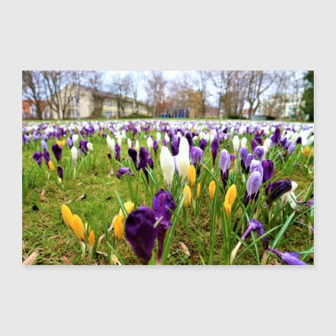 Tulpenwiese - Poster 36 x 24 (90x60 cm)