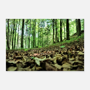 Recreational Forest, foliage, recreation - Poster 36 x 24 (90x60 cm)