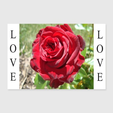 Love (Rose) - Poster 36 x 24 (90x60 cm)