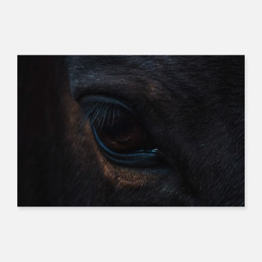 Hengst black horse eye - Poster