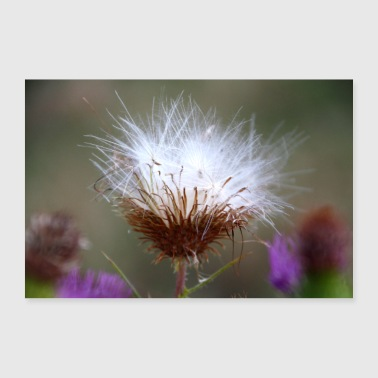 Thistle seed flower - Poster 36 x 24 (90x60 cm)