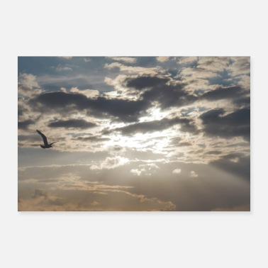 Flight gull - Poster 36 x 24 (90x60 cm)