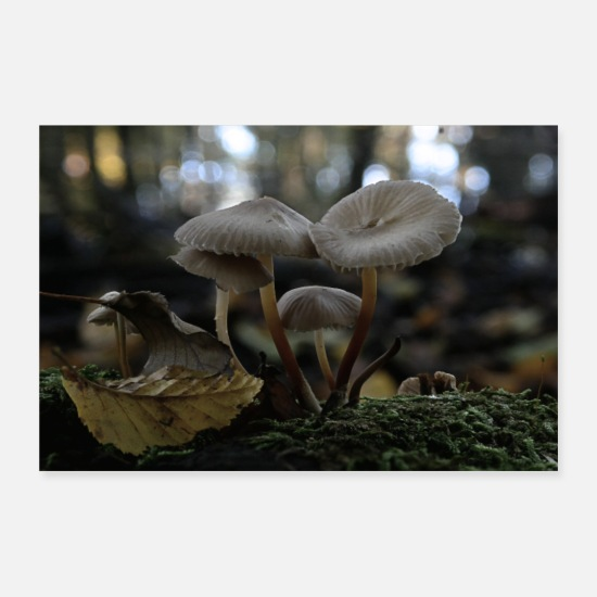 Fungal Posters - Mushrooms in the forest - Posters white