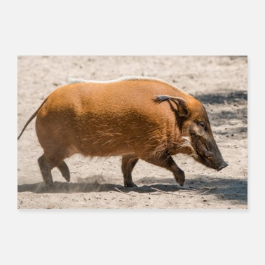 Hog Paintbrush pig, river pig - Poster