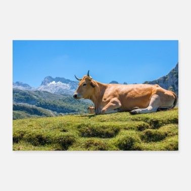 Grass Cow in the mountains of Asturias - Poster 36 x 24 (90x60 cm)