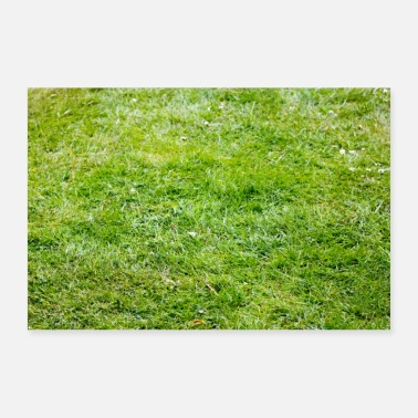 Lawn Green lawn in the garden on the field, place, park - Poster