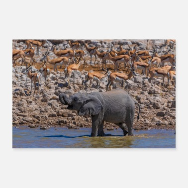 Africa Young elephant - Poster