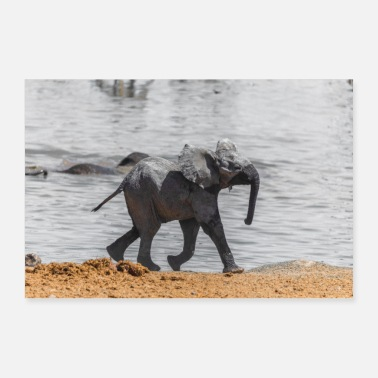 Wilderness Baby elephant - Poster