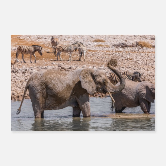 Forest Posters - Elephant family - Posters white