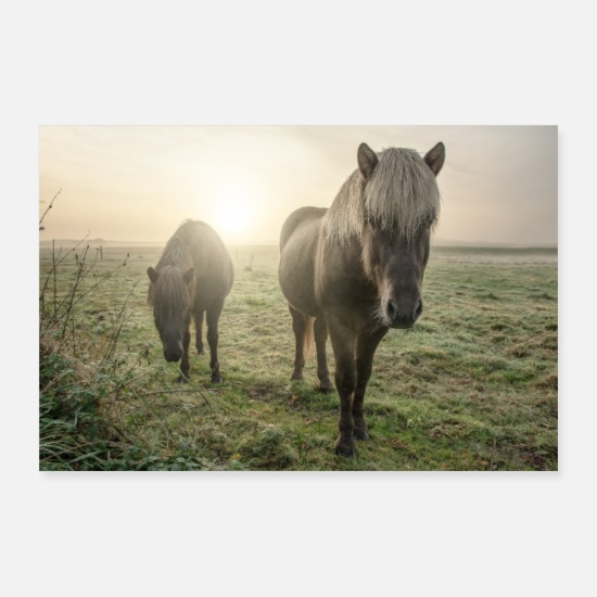Paarden Posters - paarden - Posters wit