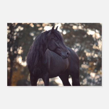 Autumn Horse portrait Andalusian in front of autumn trees - Poster