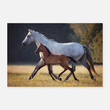Mare Mare with foal on the horse paddock in the evening - Poster