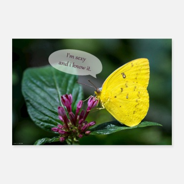 Speech Balloon Butterfly with speech bubble - Poster
