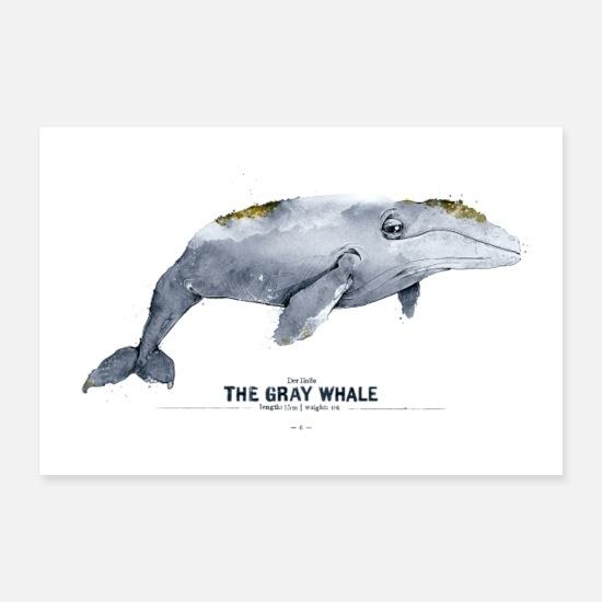 Birthday Posters - Gray whale (The Gray Whale) - Posters white