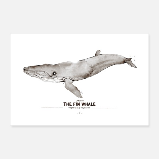 Derholle Poster - Finnwal (The Fin Whale) - Poster Weiß