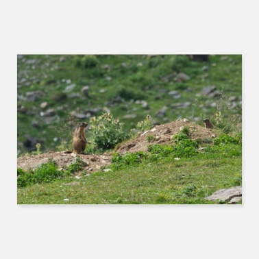 Meteorologist Respect Groundhog Family Spring Animals Woodchuck - Poster