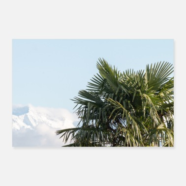 Winter Palm tree in front of the snow-capped Alps - Poster