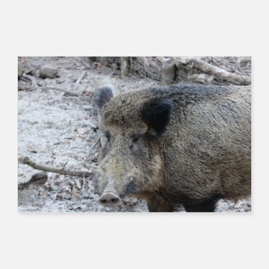 Sow Wild boar hunter ranger hunt forest gift - Poster