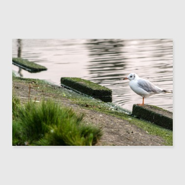 Seagull on the shore - Poster 36 x 24 (90x60 cm)