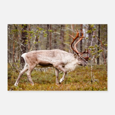 Reindeer walking in the forest - Poster