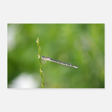Shot Macro shot of a dragonfly - Poster 36 x 24 (90x60 cm)