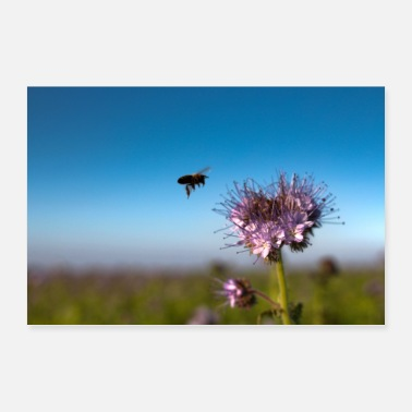 Nature Collection Bee collects nectar - Poster
