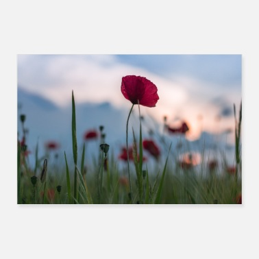 Mobile Poppies field - Poster 36 x 24 (90x60 cm)