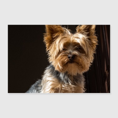 Yorkshire Terrier - Poster 36 x 24 (90x60 cm)